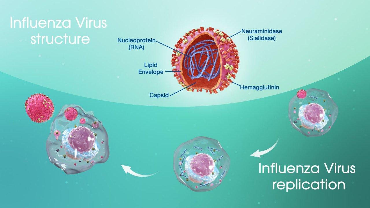 Virion, virus, ta, chúng nó, và chúng ta