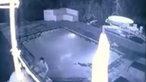 Tắm hồ bơi khách sạn, suýt bị cá sấu xơi tái