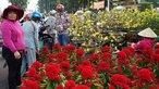 Trưa 30 tết nhiều điểm bán hoa ở TPHCM quyết không giảm giá