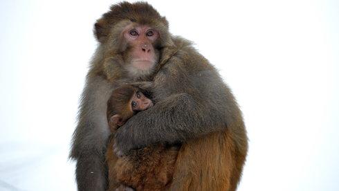 Thật giả chuyện 60% động vật hoang dã bị hủy diệt