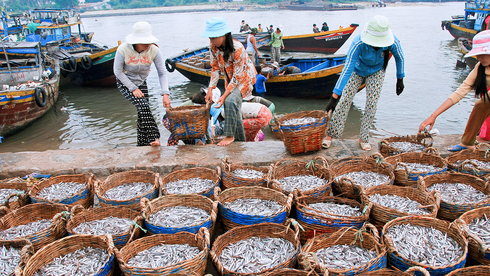Trăm năm thăng trầm nước mắm Phú Quốc
