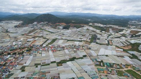 25 năm phát triển nhà kính của Đà Lạt: Qua hân hoan là mất mát