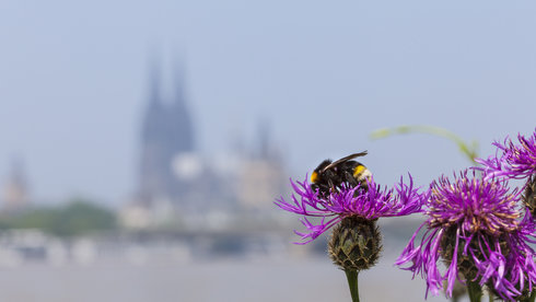 Hãy để ong chung sống với người