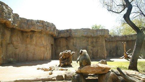 Các sở thú và thách thức sinh tồn