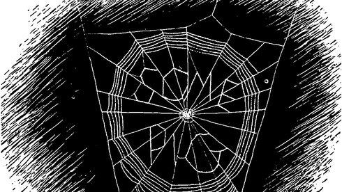 Bài học cho báo chí từ cô nhện Charlotte: Bạn tốt và bút sắc