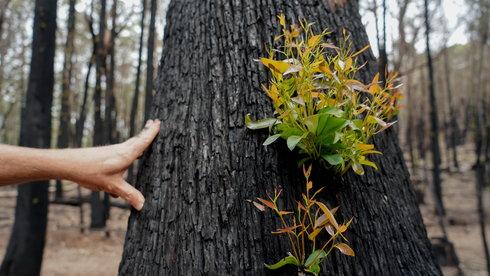 Chuyện trồng rừng của người trẻ