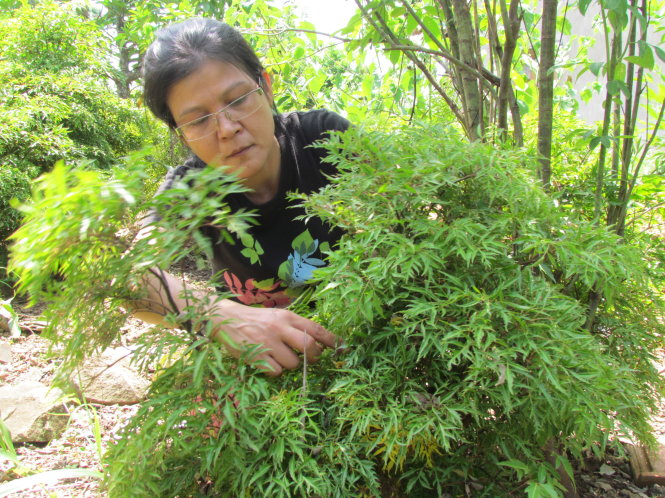 At the end of every week, Mrs. Bao also enlisted to visit the gardens of making incense sticks, taking care of the plants in the garden by herself - Photo: Bao Chau