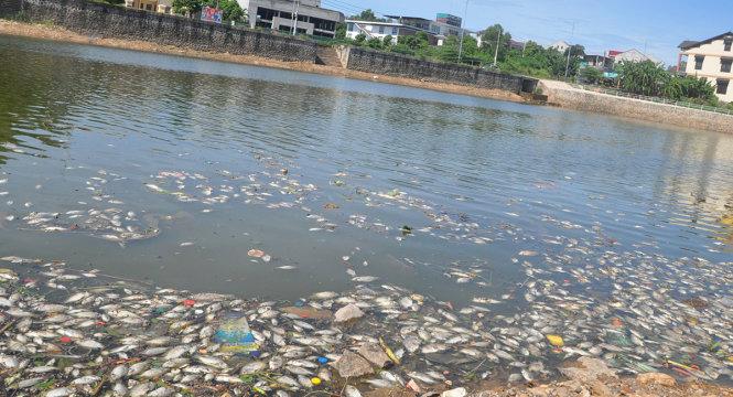 Cá hồ Đại An chết hàng loạt do nước bị ô nhiễm nặng - Tuổi Trẻ Online