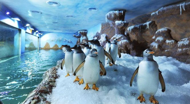 *** Error *** Đến phú quốc coi chim cánh cụt đùa giỡn, bơi lượn Đến Phú Quốc coi chim cánh cụt đùa giỡn, bơi lượn ee2b7aa5