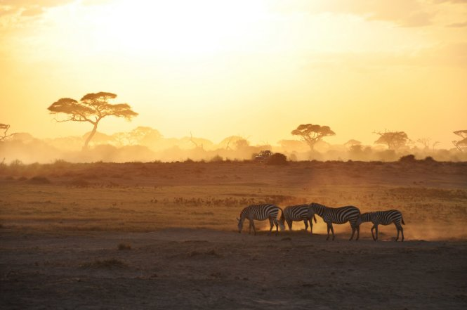Kenya is another region where it pays to drag yourself from slumber in the early hours, in order to catch a morning dose of 'golden hour', seen here in the Amboseli National Park © Getty Images