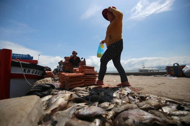 Xác cá chết nằm la liệt dọc các con đường ven biển ở huyện Vạn Ninh, tỉnh Khánh Hòa.-Ảnh: NAM TRẦN