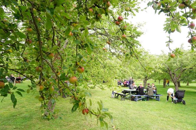 Vườn táo là nơi nhiều gia đình tìm đến quây quần dịp cuối tuần.- Ảnh: CÔNG NHẬT