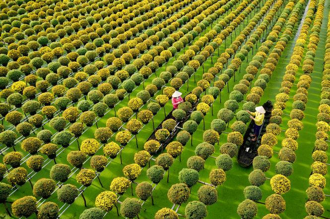 Làng hoa kiểng Sa Đéc chuẩn bị cho Tết Mậu Tuất. Ảnh: Hiếu Minh Vũ