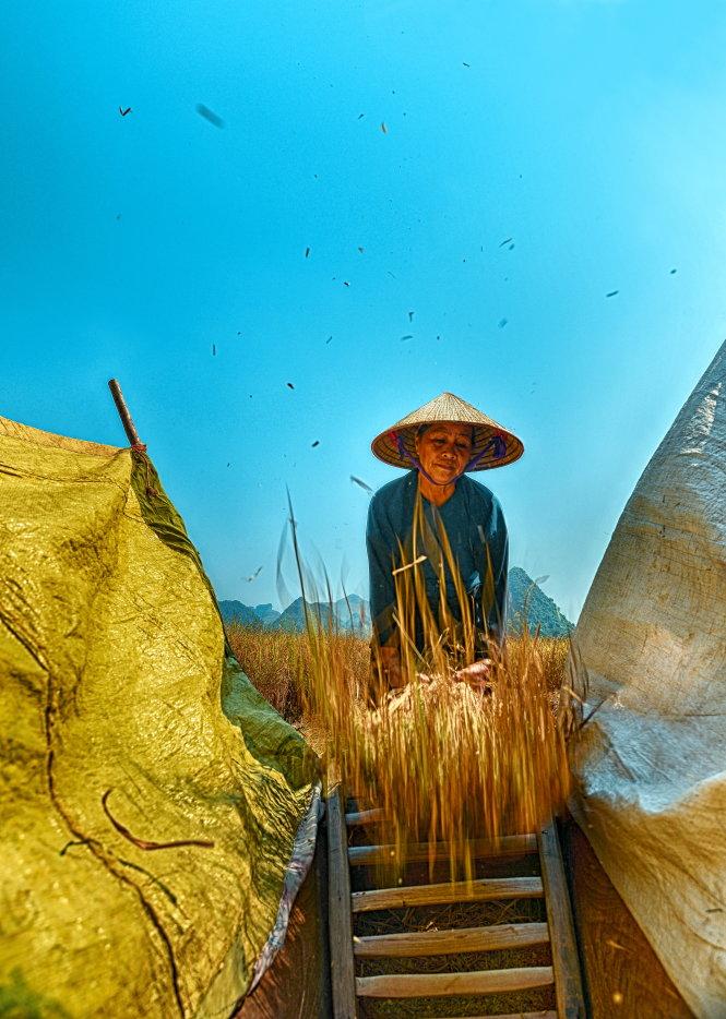 Người nông dân vẫn thu hoạch lúa bằng những nông cụ truyền thống từ lâu đời