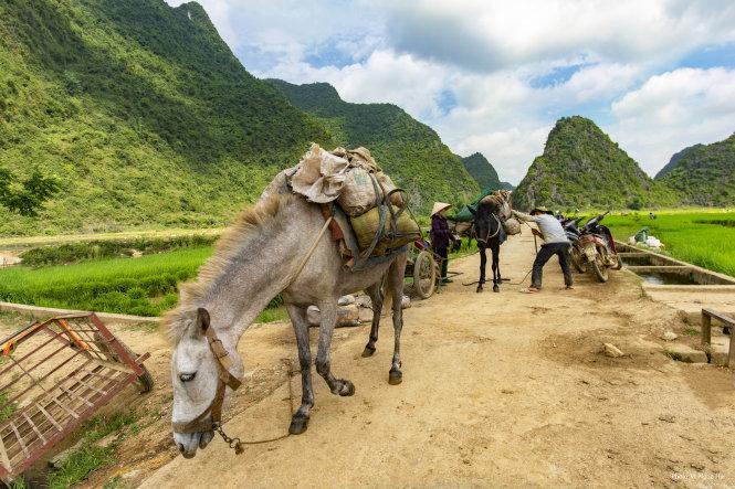 Lồ là phương tiện duy nhất làm nhiệm vụ chuyển hàng hóa, nông cụ qua sông, leo núi đá và lội những thửa ruộng sâu mà trâu bò không thể di chuyển