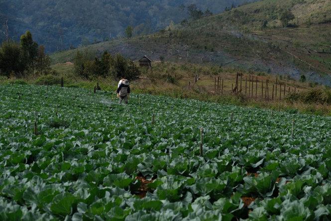 Trồng rau ứng dụng công nghệ vi sinh đang là một hướng phát triển được chú ý tại Măng Đen. Trong ảnh, người dân phun chế phẩm vi sinh thay cho thuốc bảo vệ thực vật để cây phát triển tốt nhưng vẫn đảm bảo độ sạch.-Ảnh: Mai Vinh