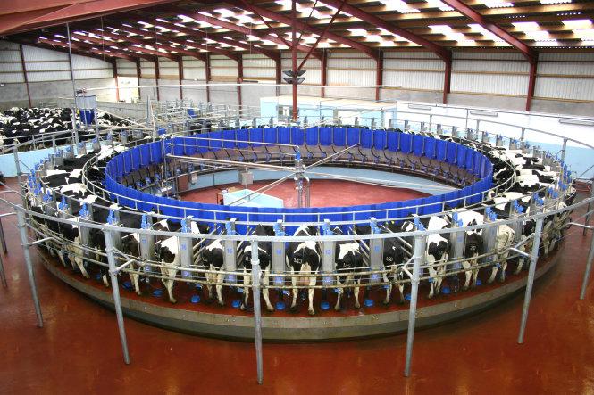 Máy vắt sữa tự động Rotolactor. Ảnh: agriland.ie