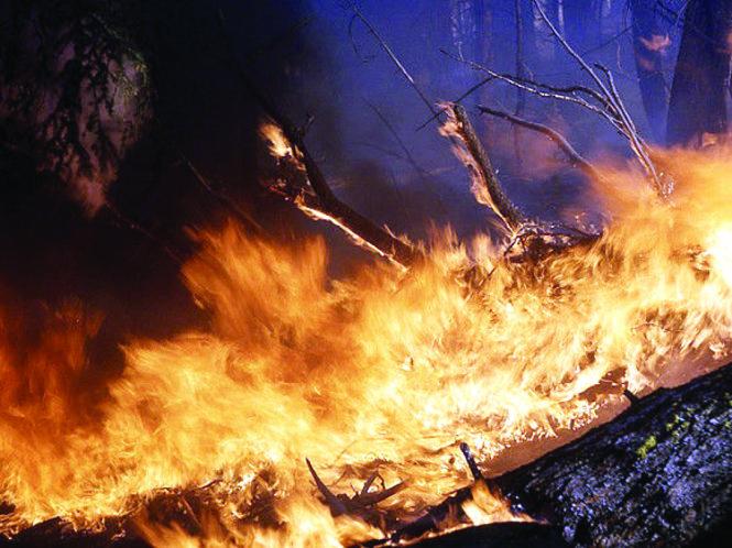 Cháy rừng ở Đông Siberia. Đến 16/7, diện tích rừng bị cháy ở Đông Siberia lên tới 350 nghìn hecta. Ảnh: rosbalt.ru