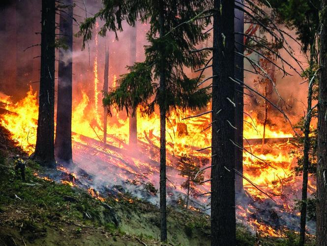 Những trận cháy rừng ở Krasnoyarsk hầu như không được dập tắt vì những lý do kinh tế.  Ảnh: kurer-sreda.ru