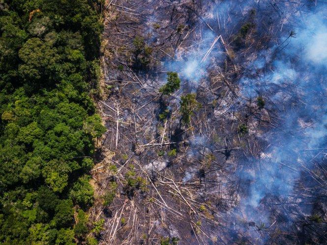 Năm nào rừng Amazon cũng cháy, nhưng năm nay tình hình đặc biệt nghiêm trọng. Ảnh: Getty Images
