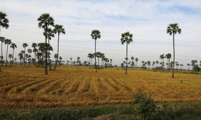 Đồng quê bắc Miến đang mùa vàng, nhìn từ chuyến tàu Mandalay - Myitkyina.