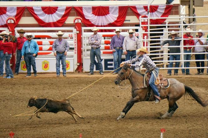 Cuộc thi cưỡi ngựa bắt bò bằng dây thòng lọng. Ảnh: Trần Lý Mẫn Huy