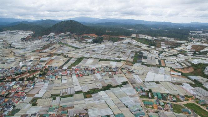 Làng hoa Thái Phiên nhìn từ trên cao, nhà kính đã phủ kín khu dân cư, bắt đầu xâm lấn những khu rừng. Ảnh: M.VINH