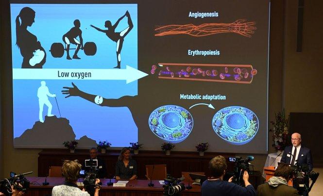 Thuyết trình về tầm quan trọng của dưỡng khí tại buổi công bố giải Nobel y sinh 2019. Ảnh: AFP