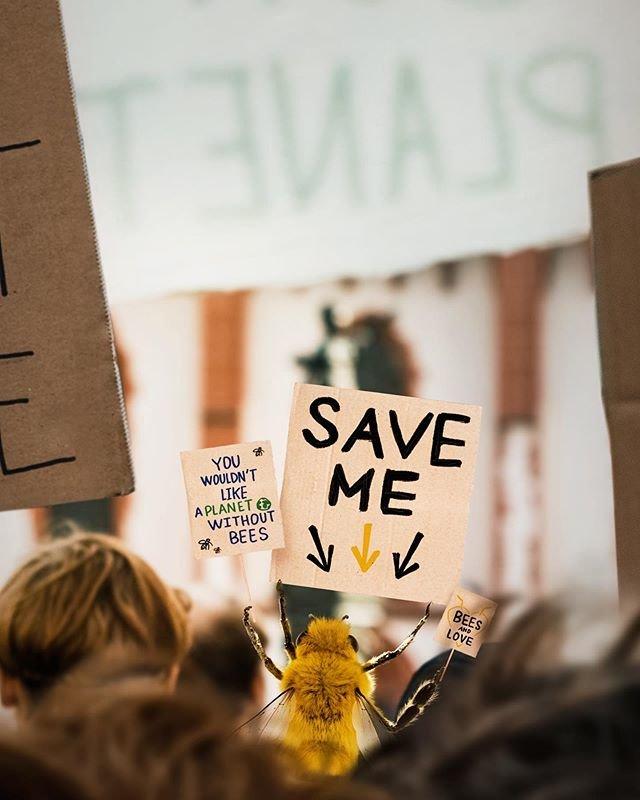 """""""Hãy cứu tôi"""", một bức ảnh mang tính thông điệp trên Instagram của cô ong B."""