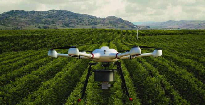 Drone đã được sử dụng để phát tán muỗi đực đã triệt sản trong các thử nghiệm và cho thấy những hiệu quả trên thực tế ở Brazil - Ảnh: FRUIT GROWNERS NEWS