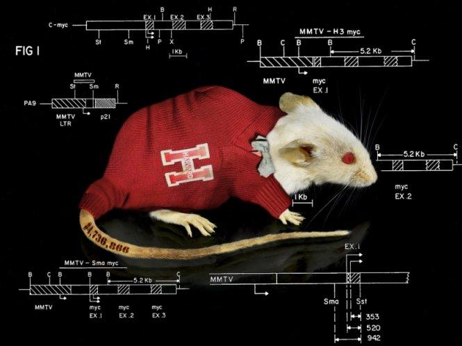 Chuột ơi, xin cảm ơn !