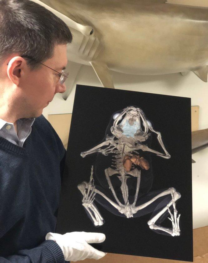 Người tổ chức triển lãm ảnh khoa học Under the Skin, tiến sĩ Daniel Ksepka bên tác phẩm chụp hình giải phẫu một con ếch bằng máy quét CT. Ảnh: Bruce Museum