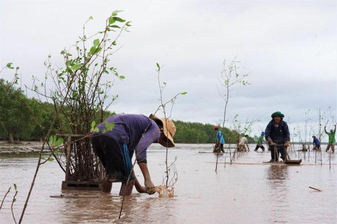 Trồng rừng tại Sóc Trăng năm 2019 của chương trình Hạnh phúc xanh. Ảnh: H.P.X.