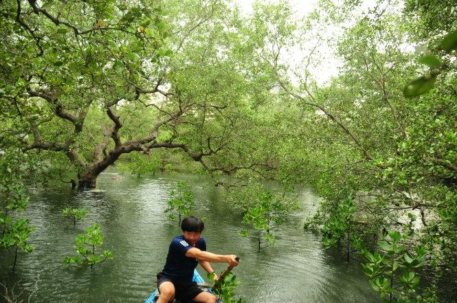 Góp cây gây rừng: Giữ báu vật trăm năm của làng biển