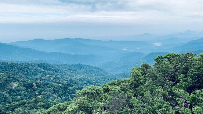 Không thể để mất tiếp rừng tự nhiên