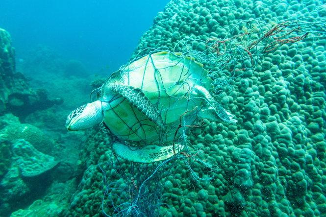 Rùa biển vướng vào lưới thải dưới biển ở Côn Đảo. Ảnh Vườn quốc gia Côn Đảo cung cấp