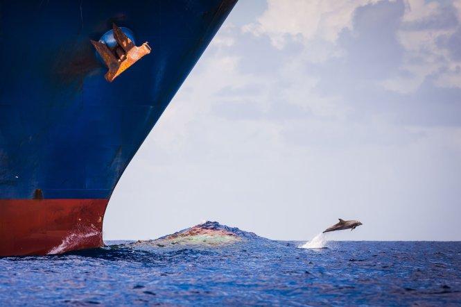 Tiếng ồn từ tàu bè có thể ảnh hưởng đến việc giao tiếp của cá heo. Ảnh: Richard Steinberger/500px