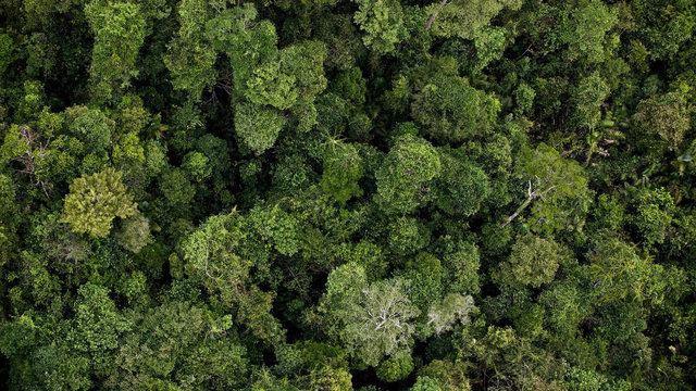 Dựng lại rừng để cứu trái đất?
