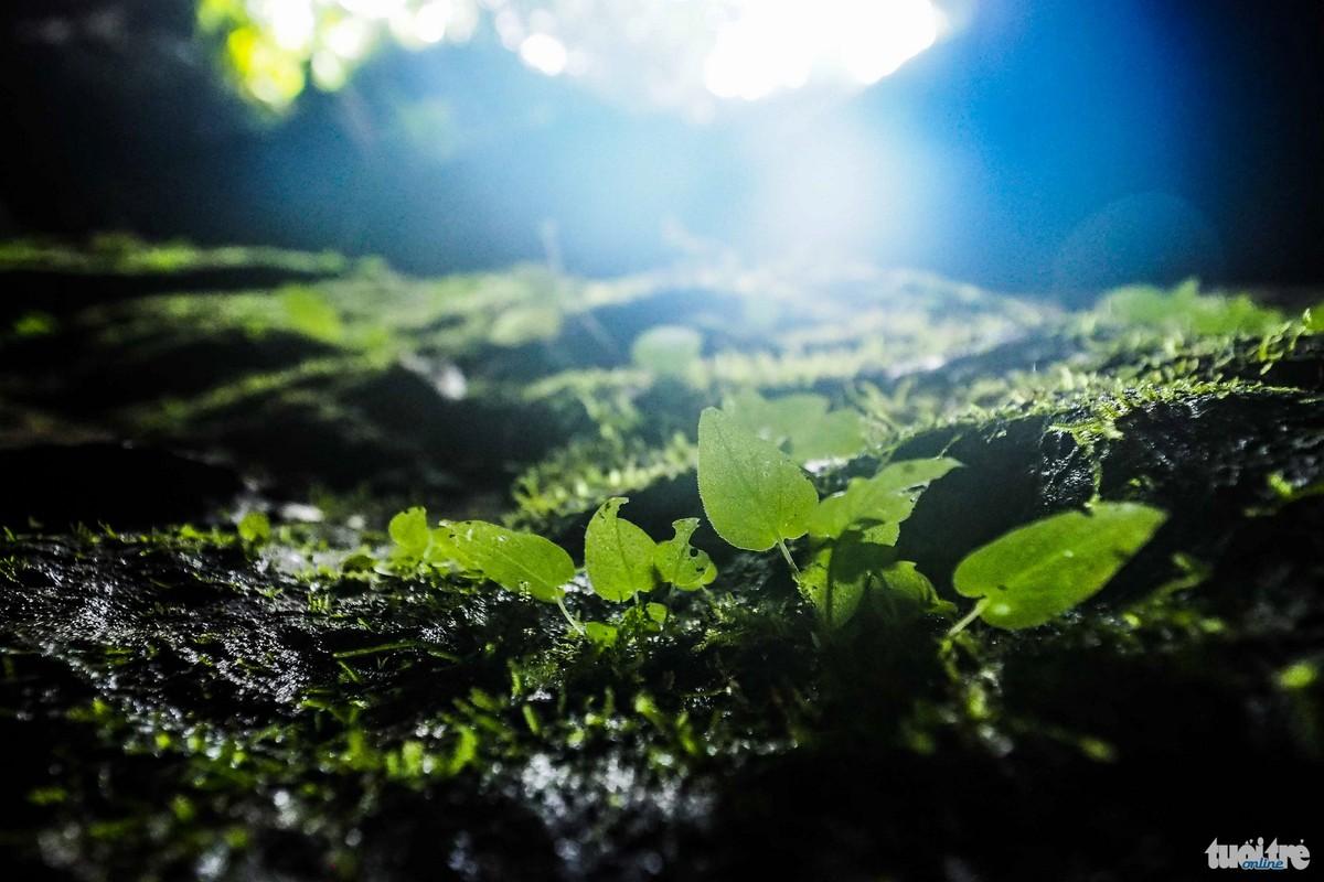 Thảm thực vật phát triển bên ngoài cửa hang -  Ảnh: Nguyễn Khánh