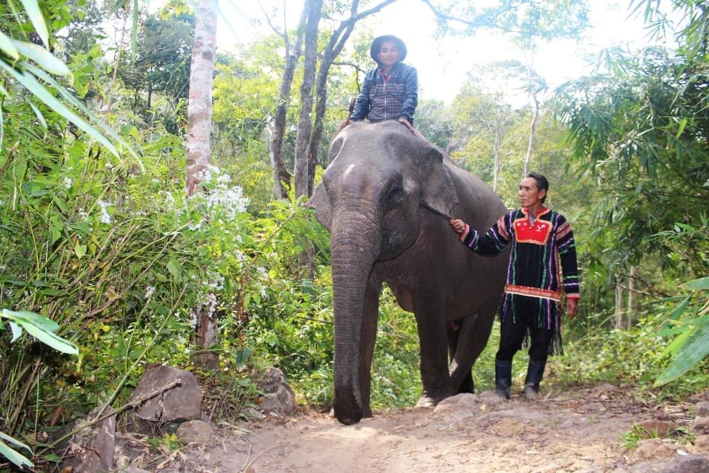 Nàng voi Yã Tâu được ông Ksor Chăm xem như một thành viên trong gia đình - Ảnh: Lê Khánh